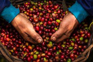 Tres regiones cafeteras que nos enorgullecen en Fiestas Patrias