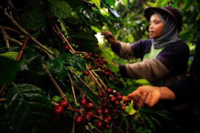 Día Internacional del Café: 1 de octubre