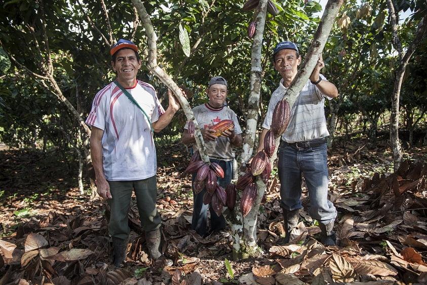 Café y cacao contra la deforestación