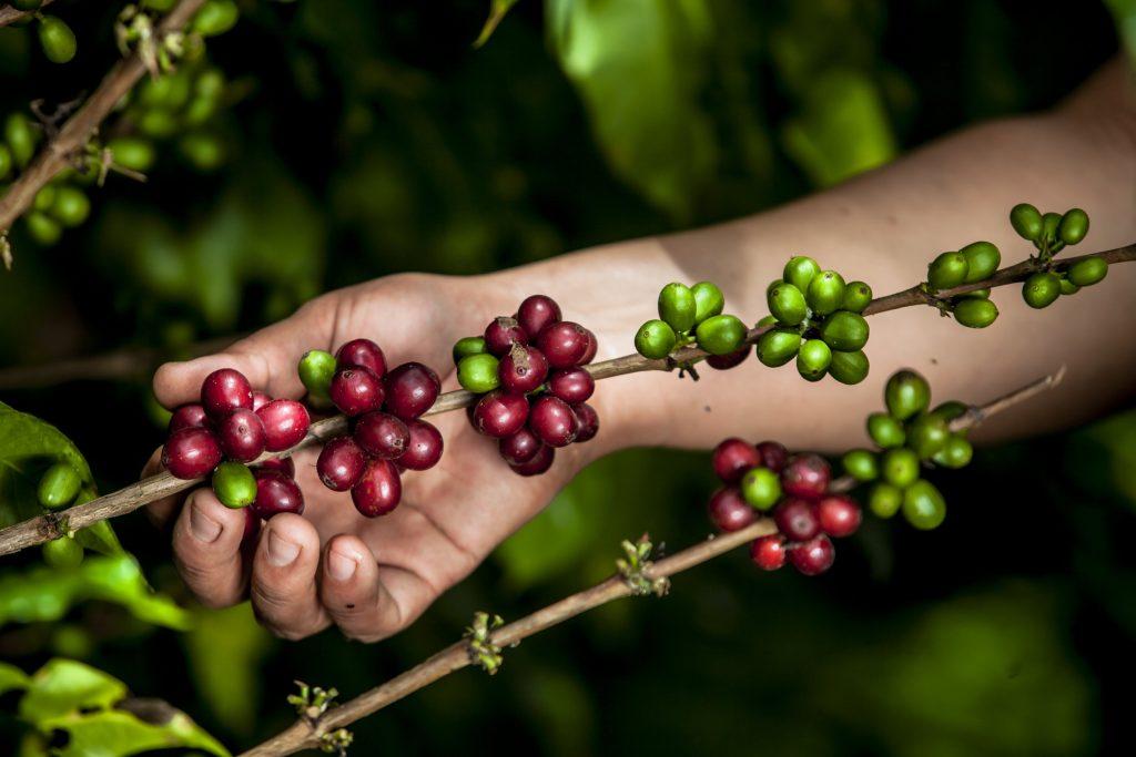 Fiestas Patrias: la selección de cafés peruanos de Cafelab