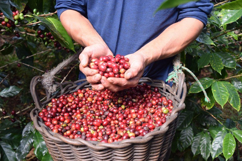 ExpoCafé Lonya Grande: En busca de los mejores cafés especiales