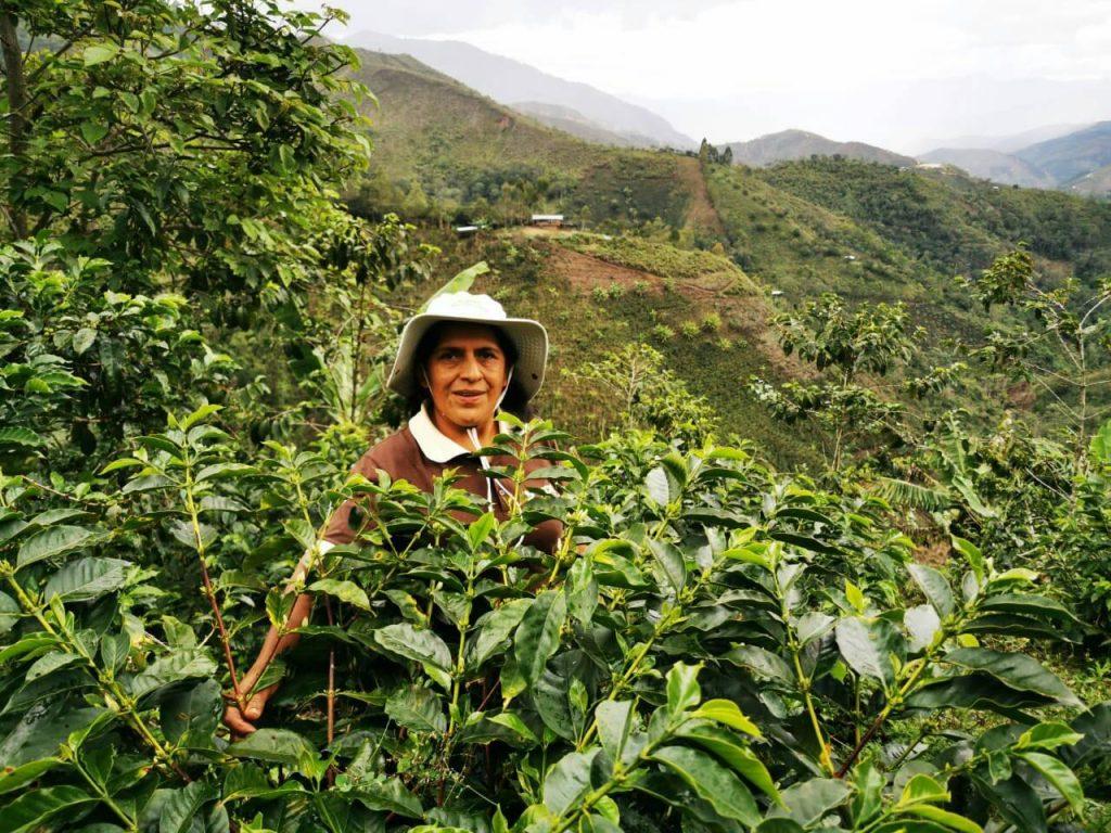 Grimanés Morales: conoce cómo produce el mejor café del Perú