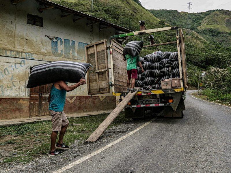 Café de Tingo María, Tocache y Moyobamba generó ventas por más de U$4.5 mlls