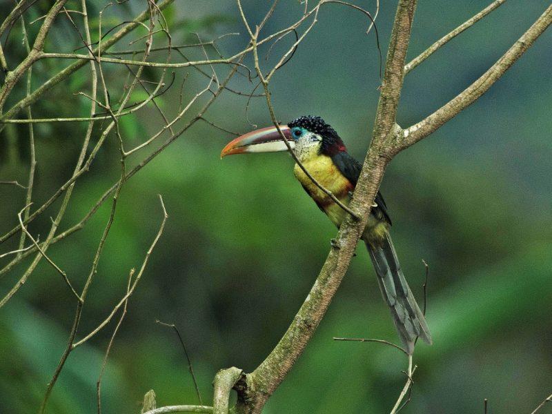 Bosques de Neblina – Selva Central: nueva Reserva de Biosfera con café