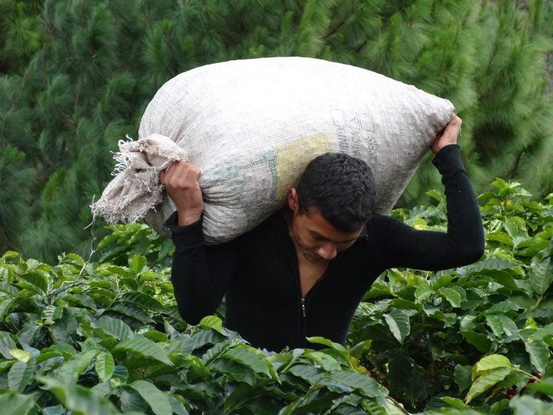 Charla: ¿Cómo Honduras logró ser un gran proveedor de café en el mundo?