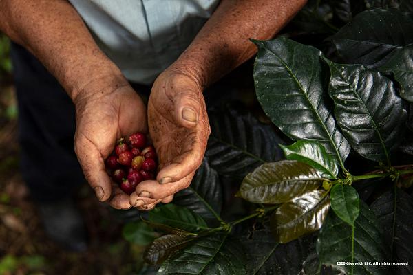 ¿Qué es el café sostenible?