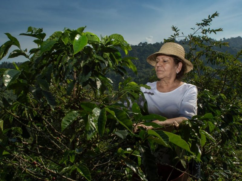Inside Job Coffee, una iniciativa por el desarrollo y la educación agrícola