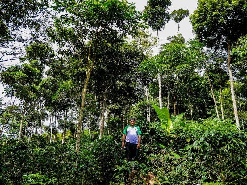 Día de la Tierra: Top 5 de iniciativas cafeteras para cuidar el planeta