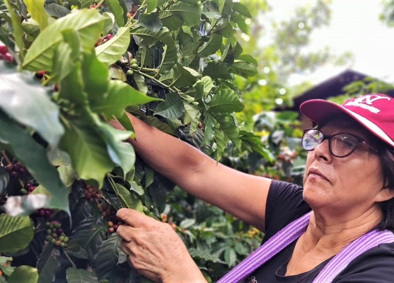 Café Maldonado y las mujeres cafeteras de Lonya Grande, Amazonas