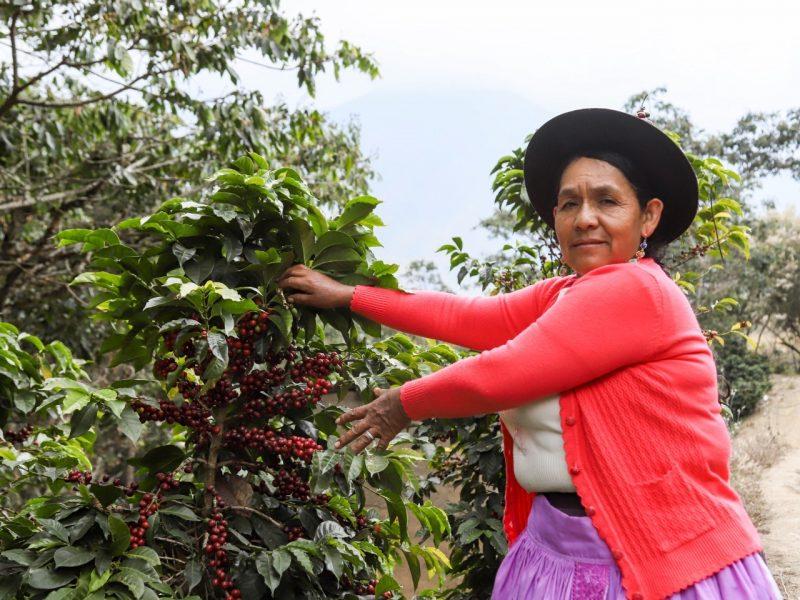 Conoce a Relinda Chávez y su café de Huancavelica para Saba Café